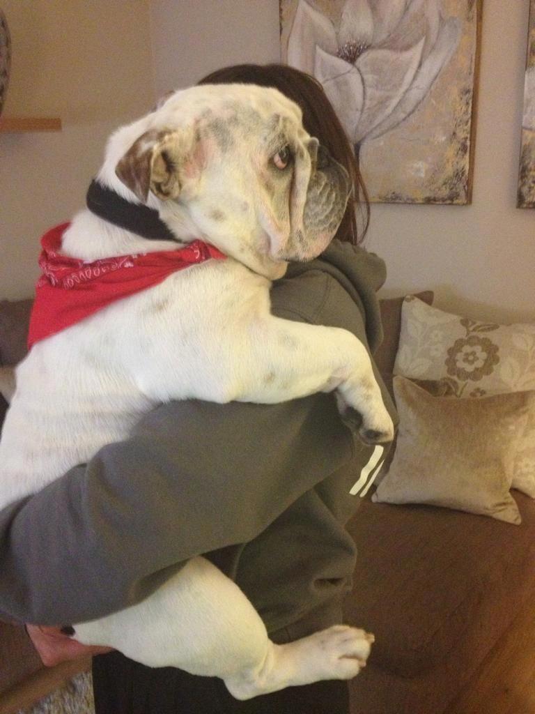 Bulldog Calm Courageous And Friendly Bulldog Funny Bulldog English Bulldog Puppies