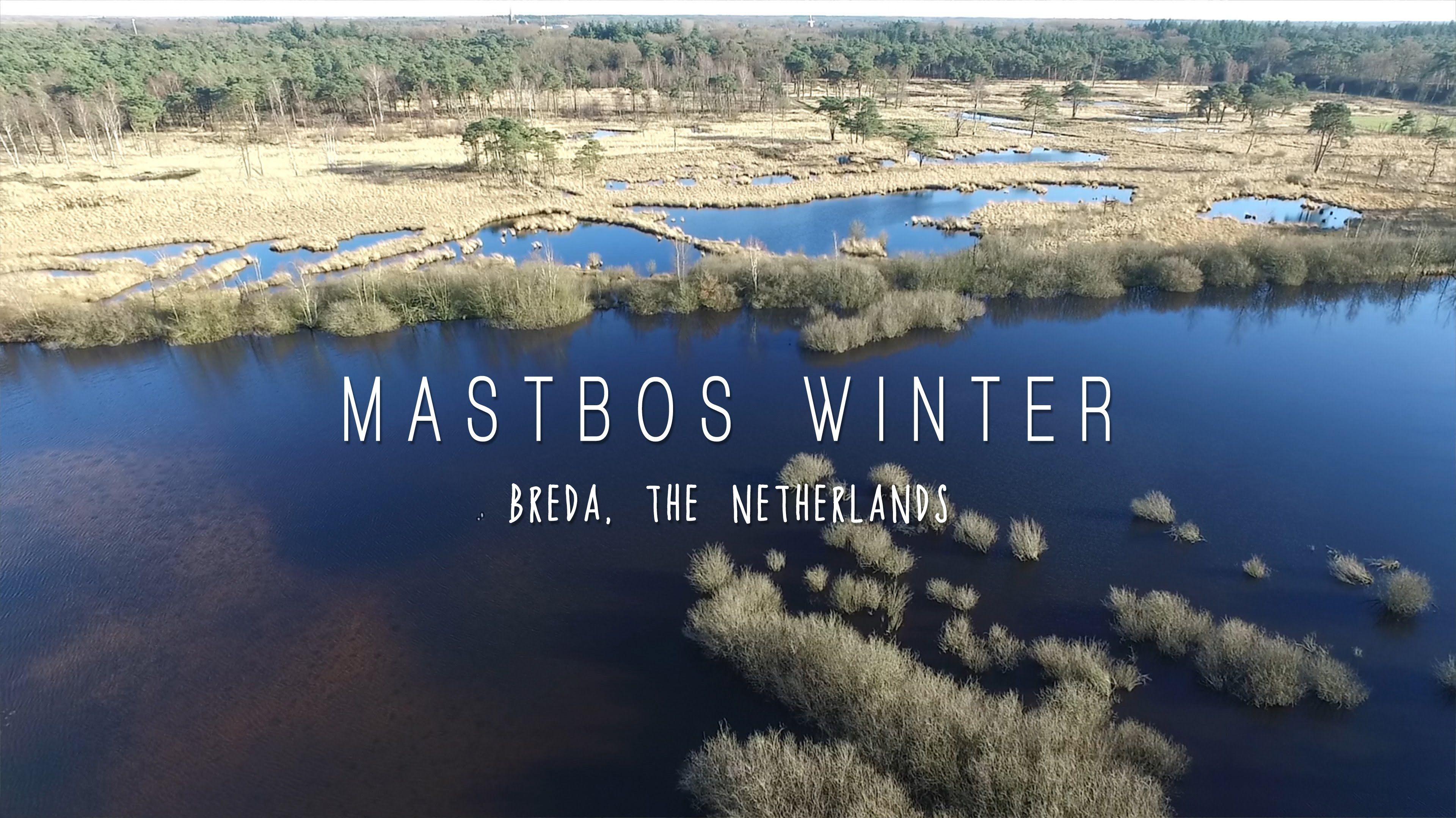 Mastbos Breda - Winterdag. Zonnige winterdag in januari 2016 in het 500-jarige Mastbos. Mastbos Breda, The Netherlands. DJI Phantom 3 Professional aerial shots – copyright larsscheve.nl.