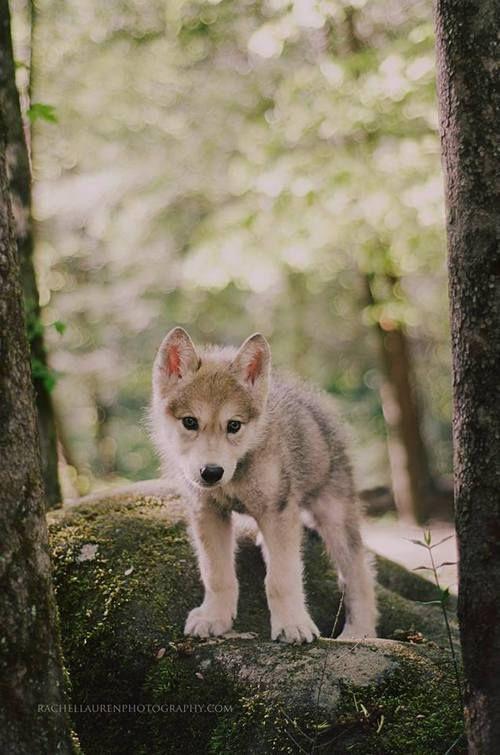 Photo of Imagen sobre cute en Cachorros / Perros / Lobos por Alyson Townsend