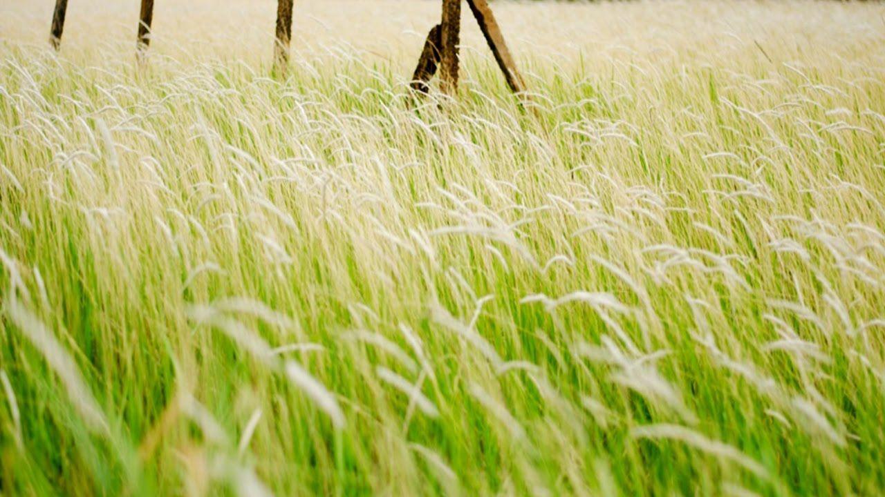 ดอกหญ้าริมทาง ศิลปิน วิว วชิรา
