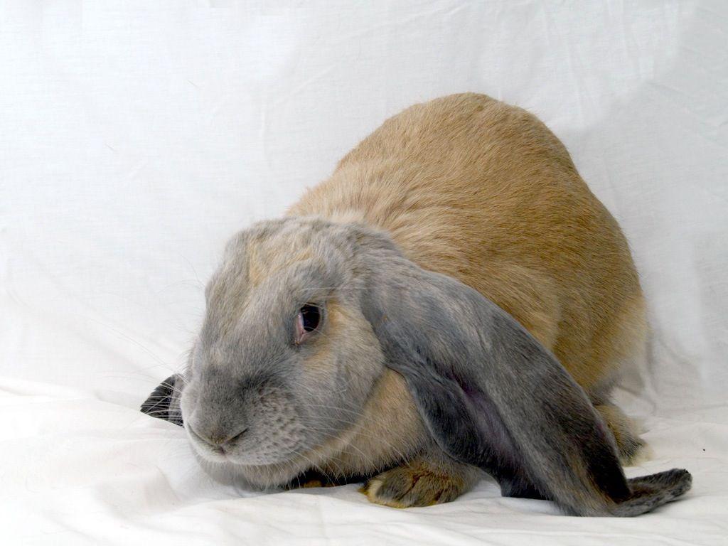 View Pet Humane Society Of Greater Dayton Humane Society Animals Cute Animals