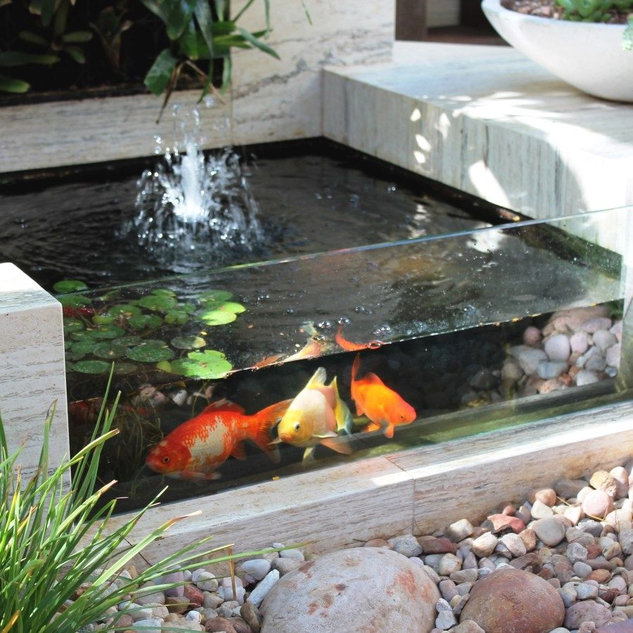 Pond design in the country with their own hands 50 photos