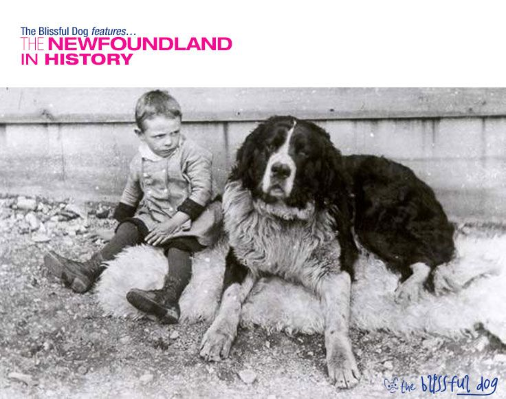 The Newfoundland Dog Was A Very Popular Pet During The 1800s And Early 1900s Newfoundland Dog Dogs And Kids Dogs
