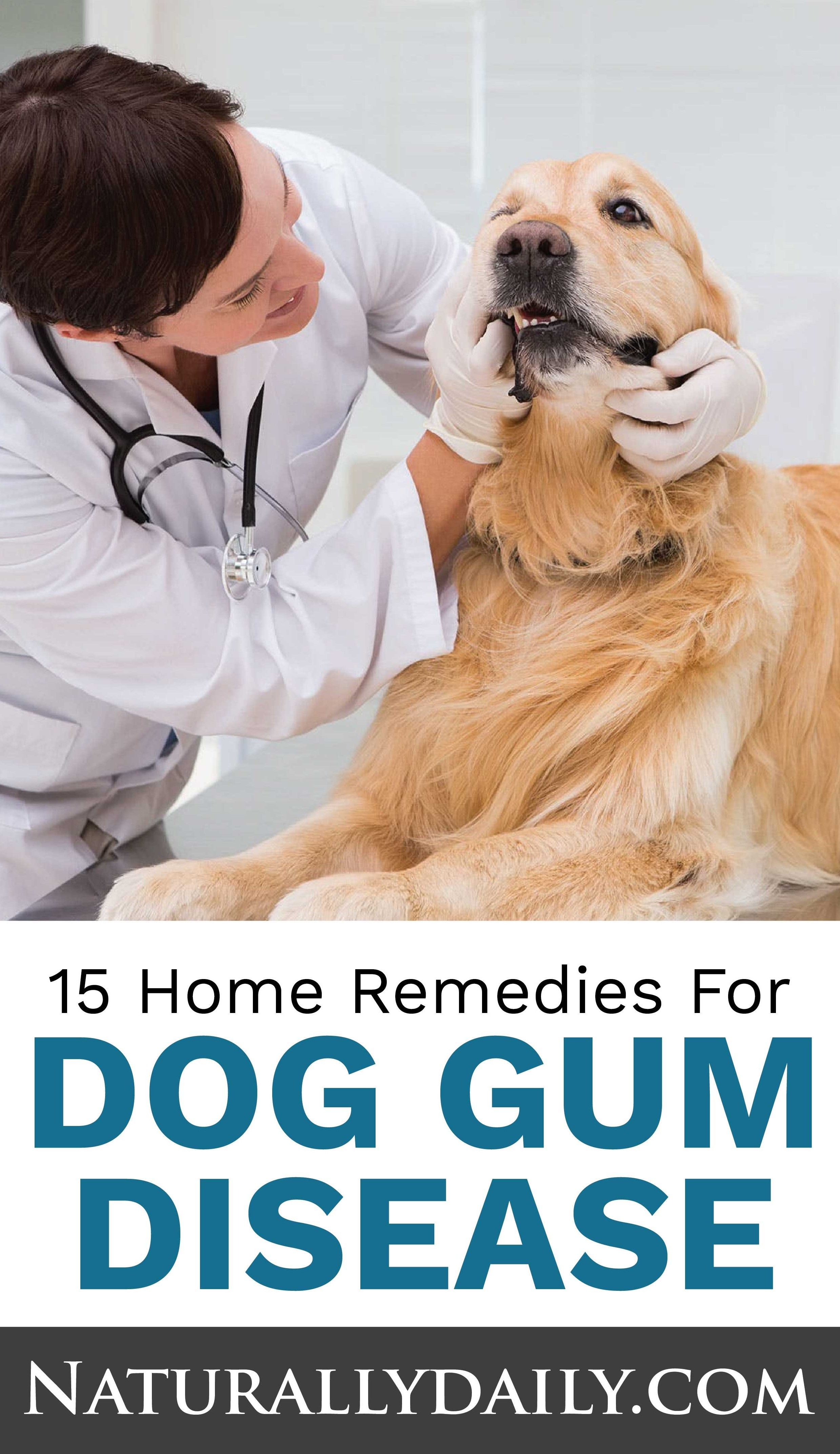 15 Home Remedies for Dog Gum Disease or Periodontitis in