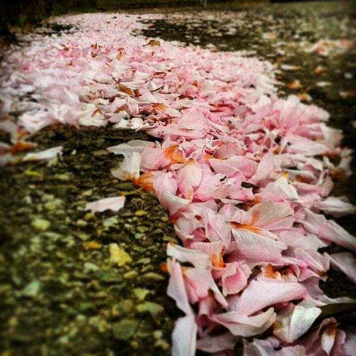 """""""try walking in my shoes"""" miracoli della natura:  sentiero di petali o petali sul sentiero..."""