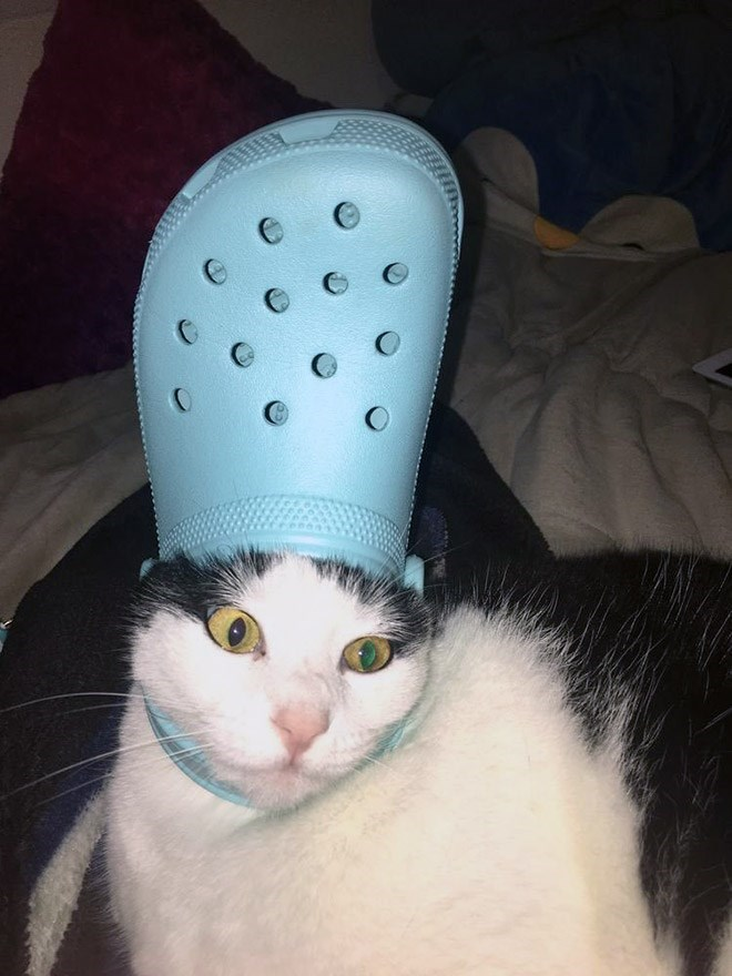 His Holiness The Pope Pets With Crocs Hats Cute Cat Memes Funny Animals Cute Animals