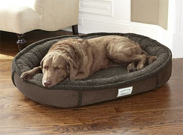 Just Found This Tempur Pedic Dog Bed Tempur Pedic