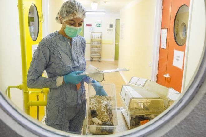 Así se experimenta con animales en España | Ciencia Home | EL MUNDO