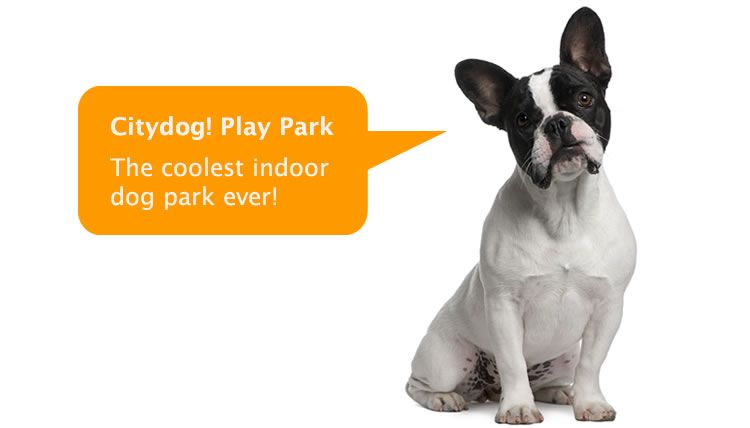 Citydog Club Dog Daycare Dog Boarding Dog Grooming And Fun Dog Daycare Dogs Dog Boarding