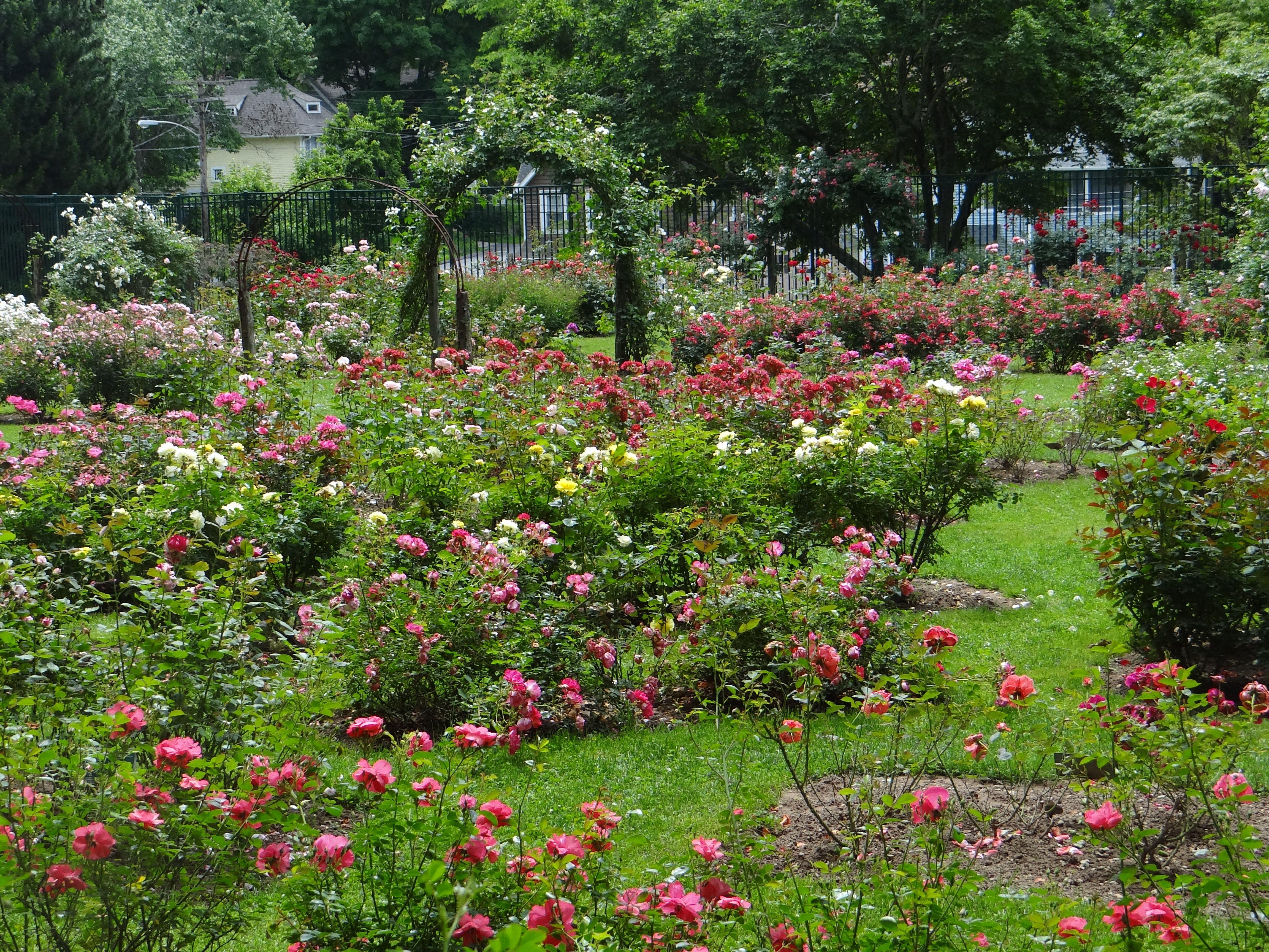 Norwich, CT Rose Garden. Beautiful! | Rose Garden ...