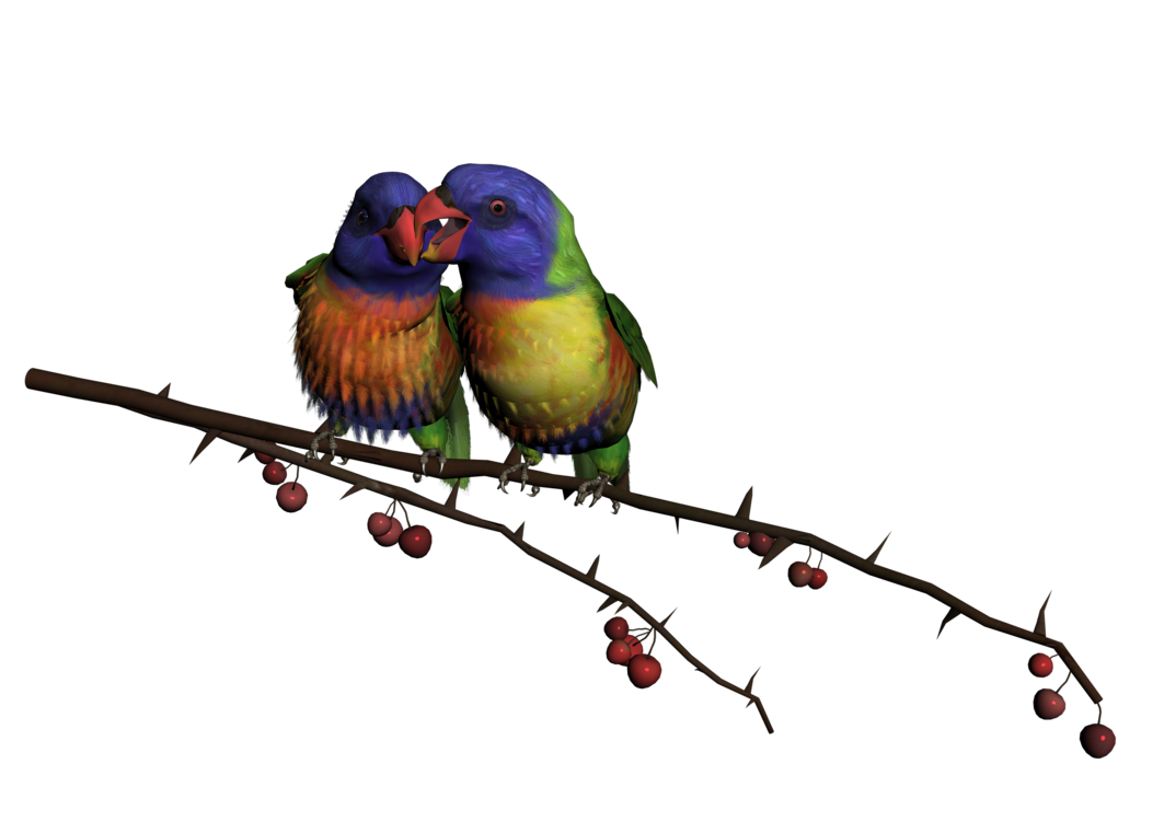Png Bird 4 By Thoartispixel On Deviantart Bird Png Love Birds