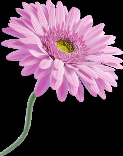 71 Png Fleurs Blanches Fleurs Jardin D Eau