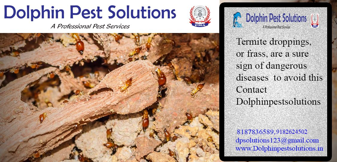 Termite droppings, or frass, are a sure sign of dangerous