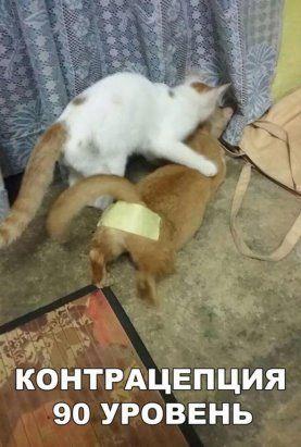 Одноклассники   Смешные фотографии животных, Смешные мемы ...