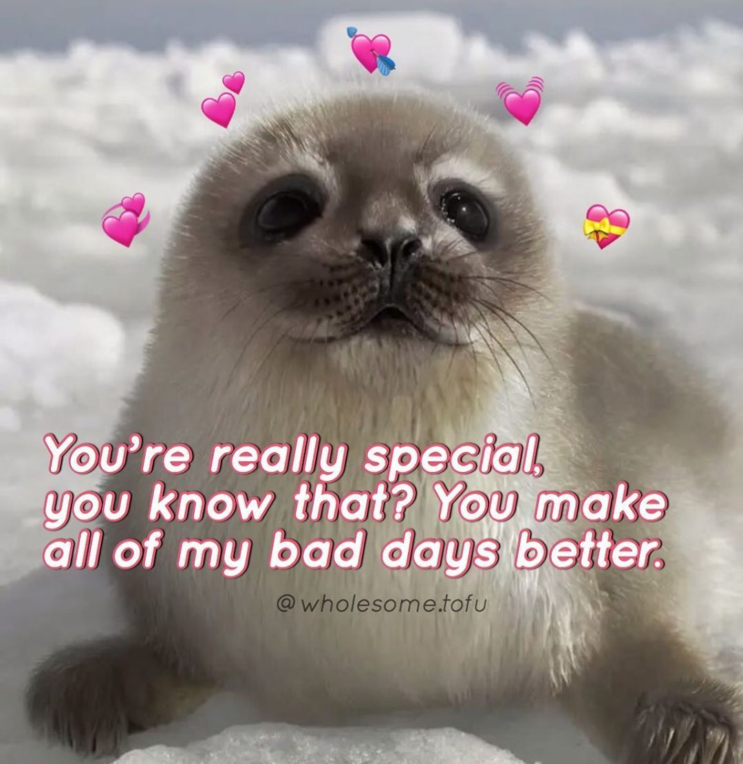Cr Wholesome Tofu On Ig Cute Memes Reaction Pictures Cute Messages