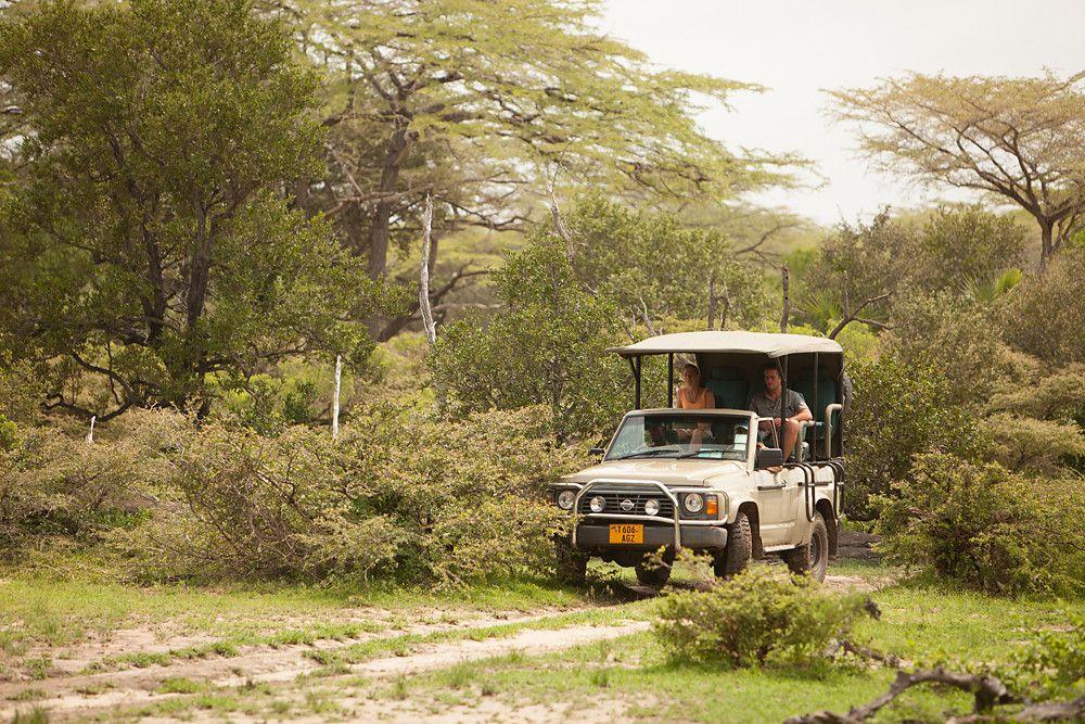 Safari @ Selous River Camp | Safari | River camp, Safari, River