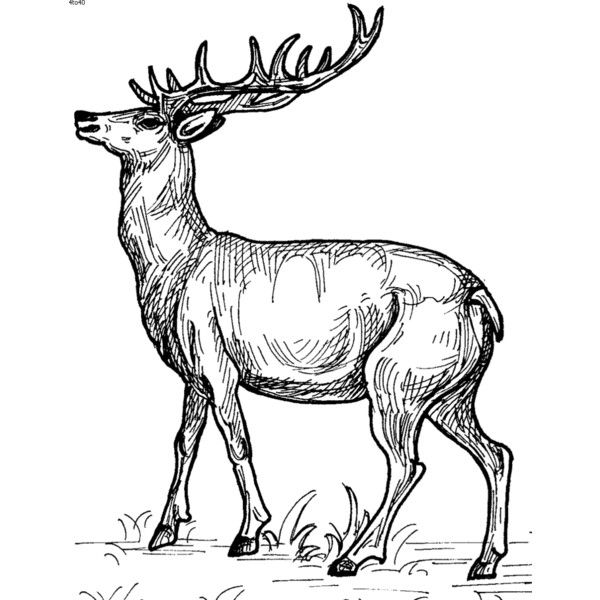 DeerAnimals Coloring Book Free Cliparts,Sketches of Deer, Printable