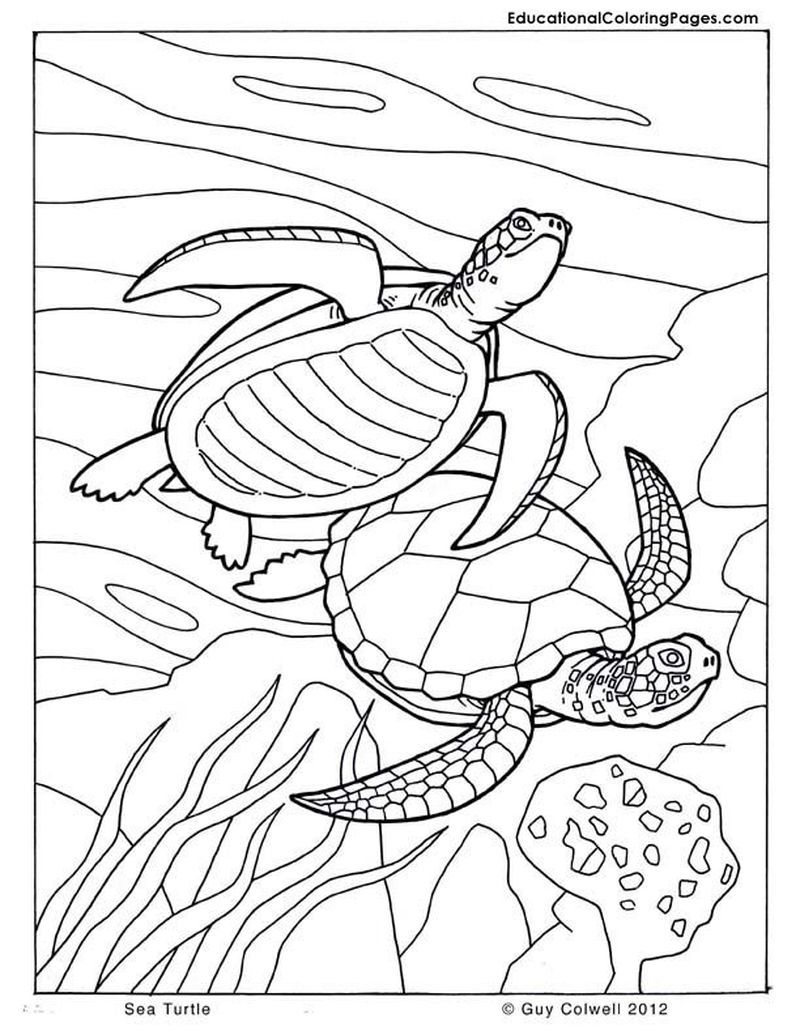 Pin On Turtle Coloring Pages