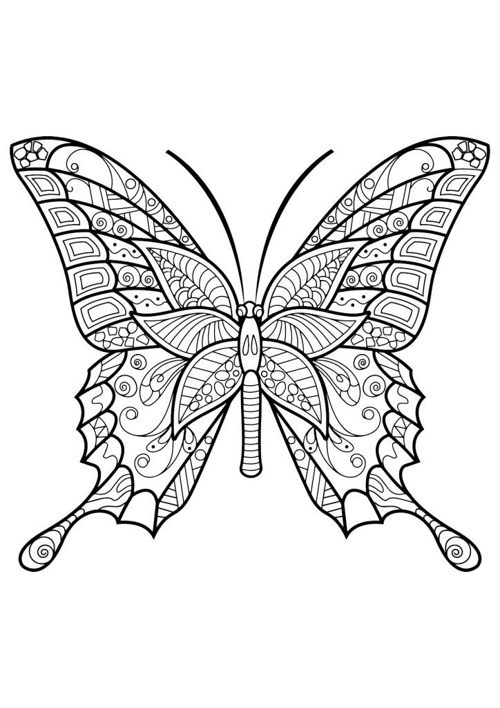 Butterfly Coloring Pages For Adults Insect Coloring Pages