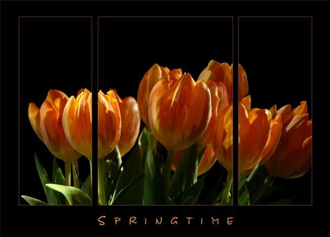 Tulpen-Triptychon