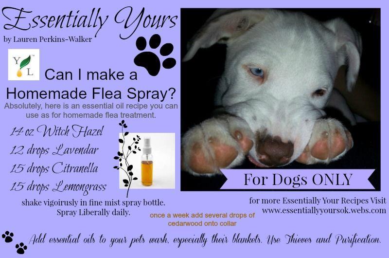 Diy Flea Repellant Save For Humans Pets Flea Repellent Flea Remedies Fleas