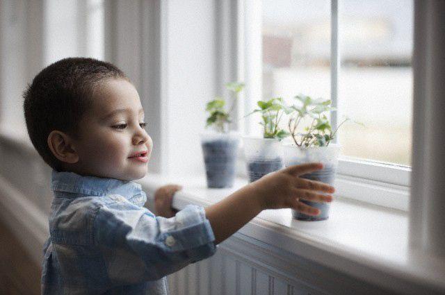 Le piante di casa: possono essere pericolose per i tuoi bambini