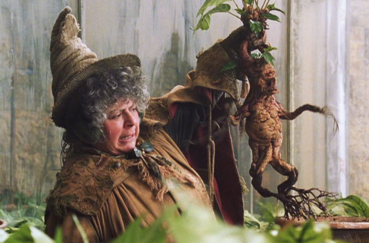 Image result for mandrake professor harry potter