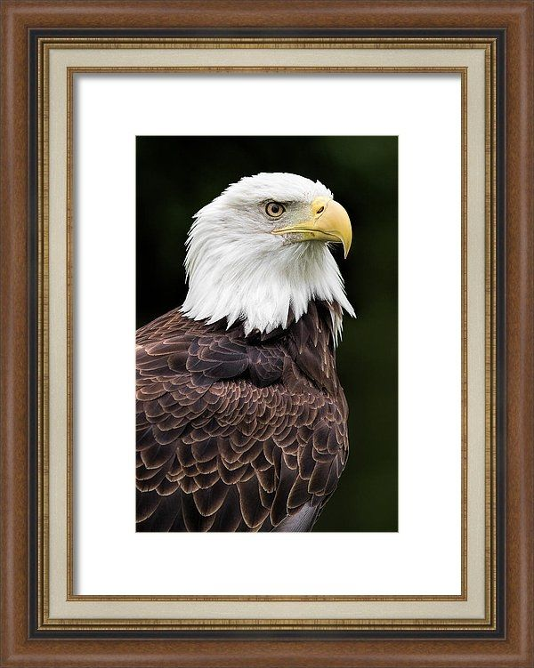 """Sold - Dale Kincaid sold a 8.000"""" x 12.000"""" print of With Dignity to a buyer from Farmington, MO."""