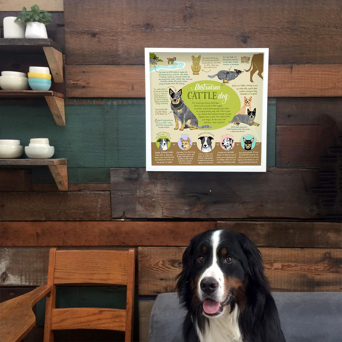 Australian Cattle Dog Infographic Print Australian
