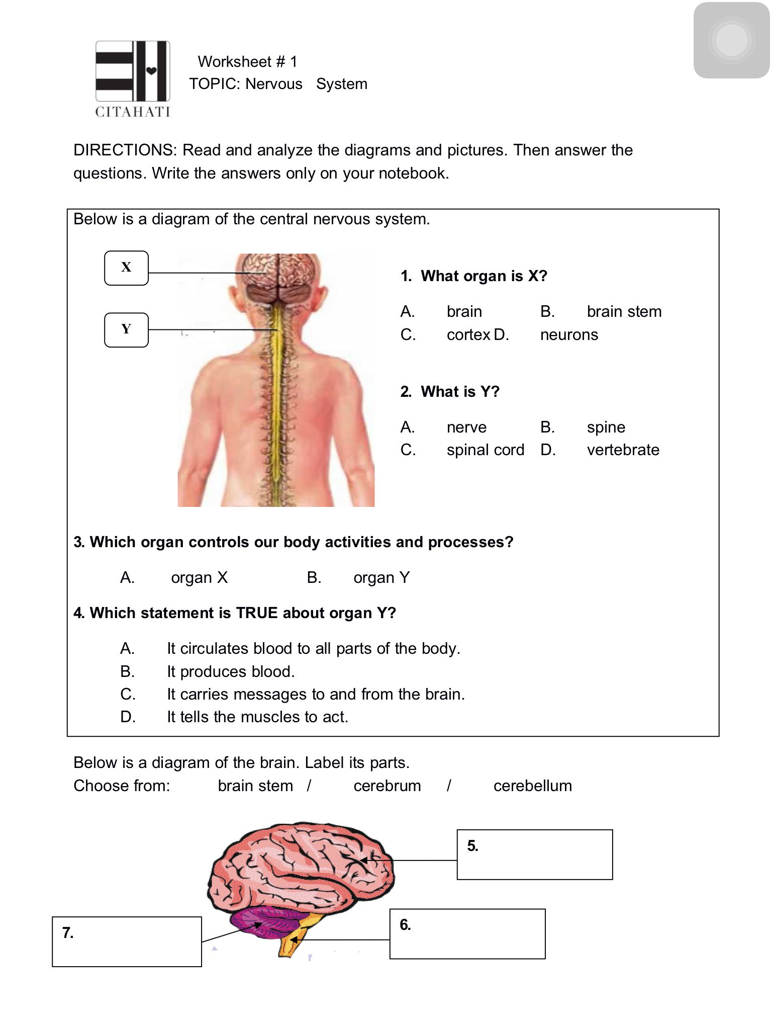 Worksheet 1 Nervous System Page 1 Theme 1