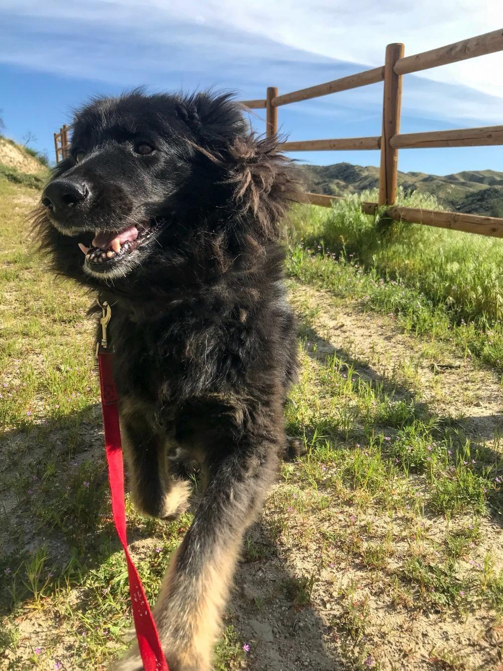 Adopt nova on petfinder in 2020 dog adoption belgian