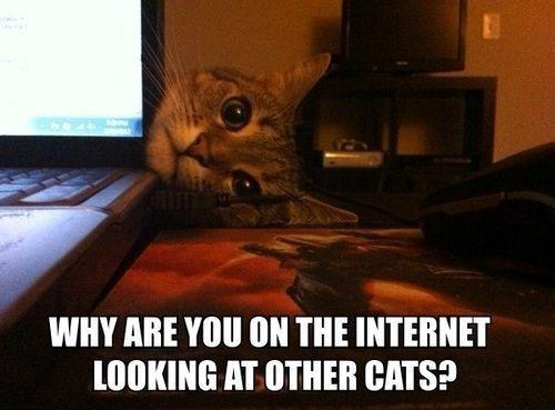 Awwww, don't be jealous little kitty!