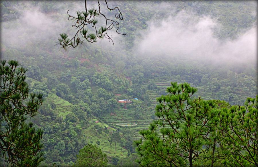 India · Situated amidst a thick canopy ... & Kangojodi: A Delightful Camping Experience | Pine forest ...
