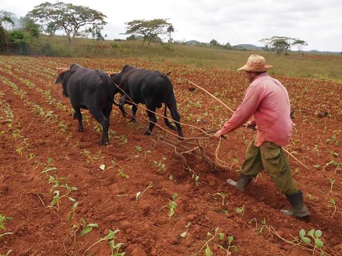 Visions for Sustainable Agriculture in Cuba