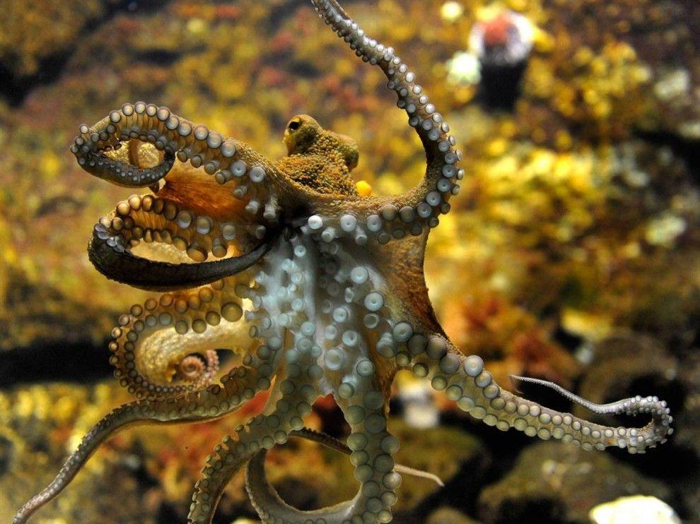 были морские осьминоги картинки с названиями рождество существует традиция