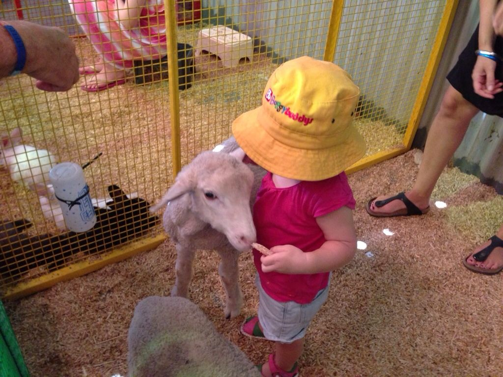 Cuddly Animal Farm Perth Swan Valley Blog No 1 Free Online Guide For Wa Families Http Www Buggybuddys Com Au Magazin Cuddly Animals Farm Animals Animals