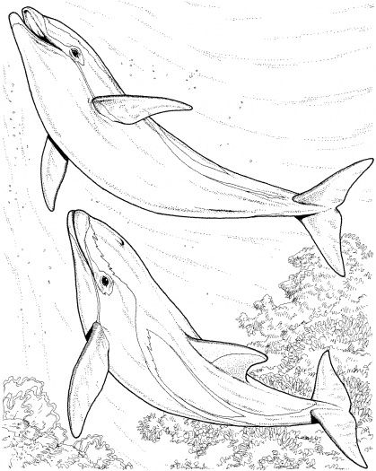 bottlenose dolphins coloring page from dolphins category select from 24848 printable crafts of cartoons nature animals bible and many more - Dolphins Coloring Pages Printable