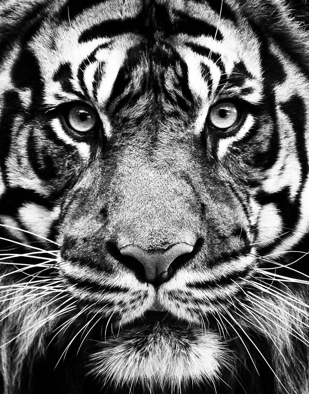 Atlanta, USA in 2020 Tiger wallpaper, Iphone
