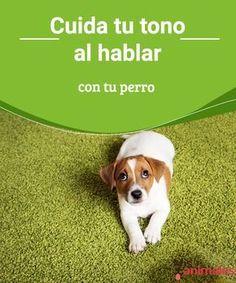 Tipos De Collares De Castigo Para Perros Cuida Tu Tono Al Hablar Con Tu Perro Banco Al Aire Libreal Aire
