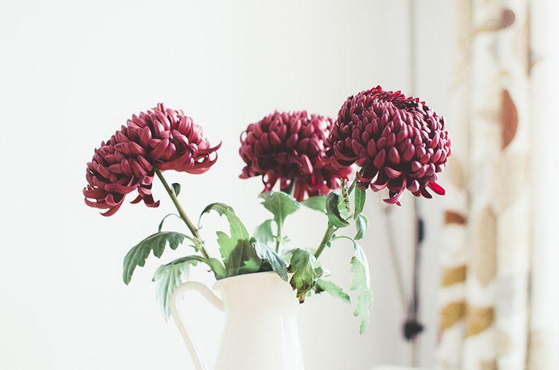 https://flic.kr/p/q1TNjA   autumn flowers