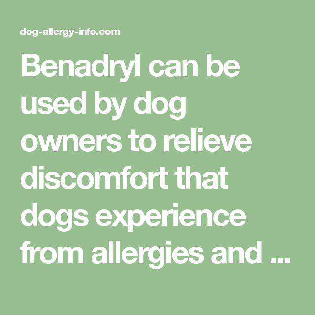 Benadryl Can Be Used By Dog Owners To Relieve Discomfort