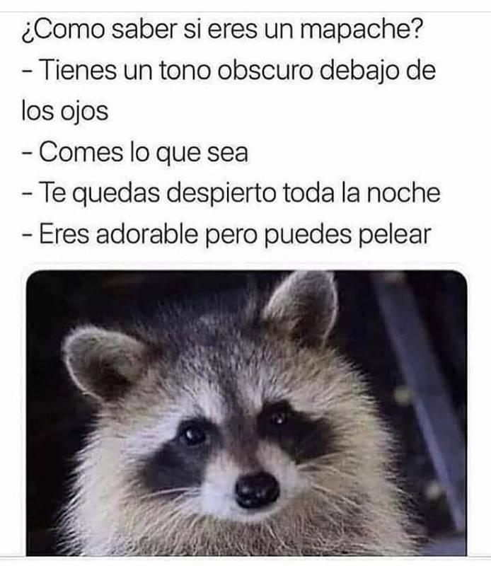 Memesespanol Chistes Humor Memes Risas Videos Argentina Memesespana Colombia Rock Memes Love Viral Bogota M Memes Divertidos Memes Meme Gracioso