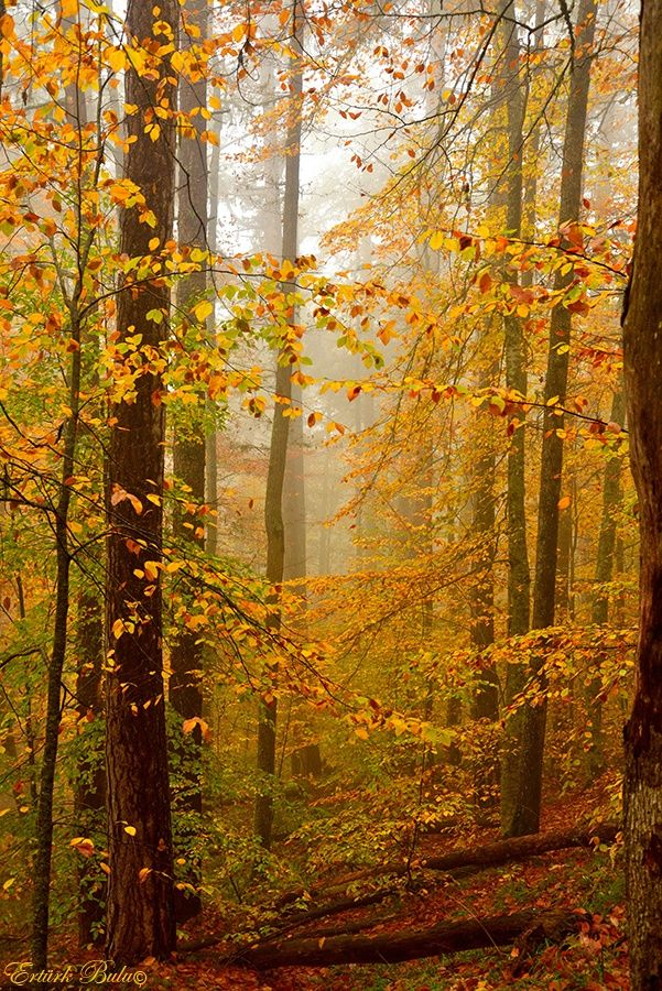 One With God Autumn Scenery Mystical Forest