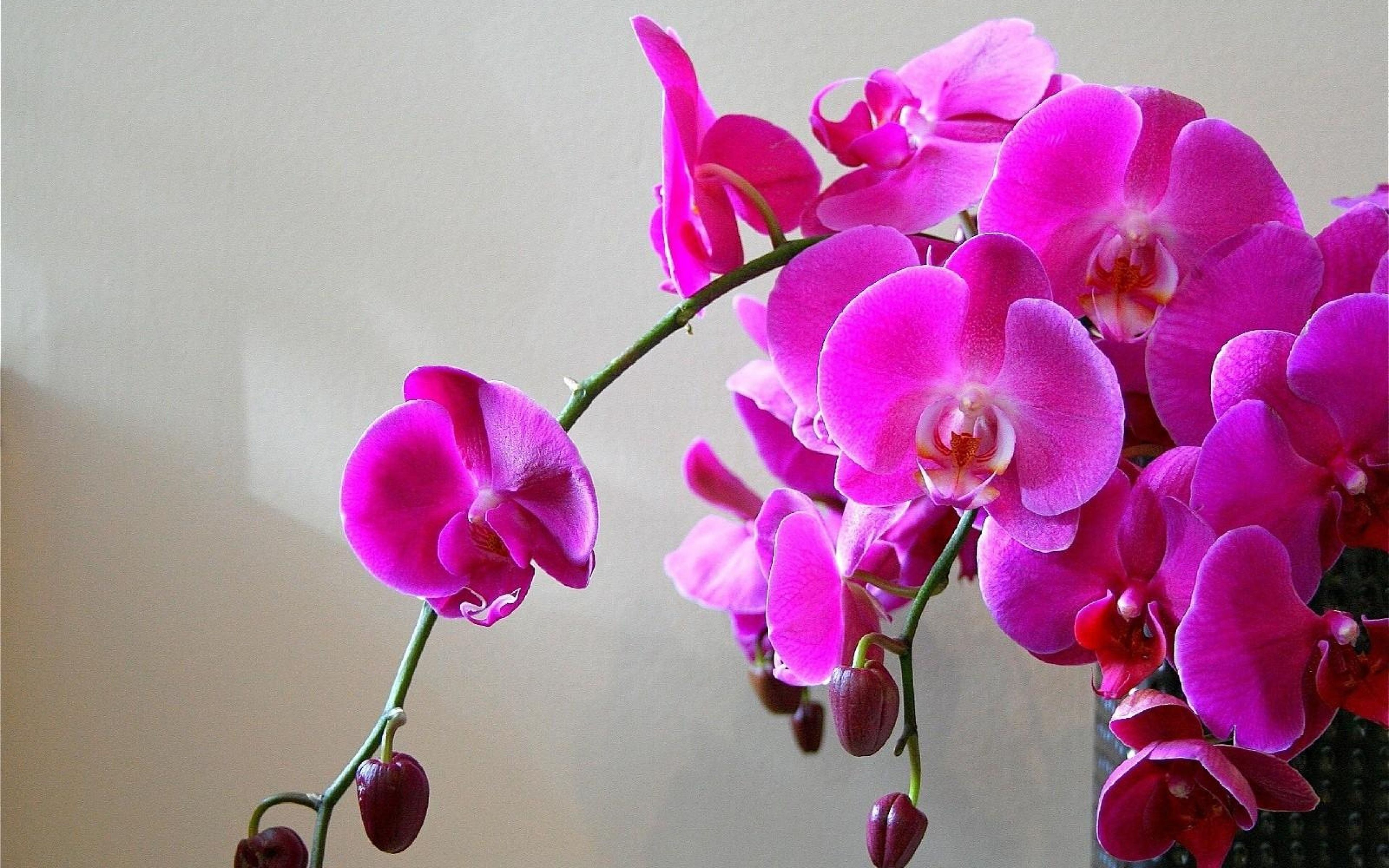 X wallpaper orchids flowers branch bright vase