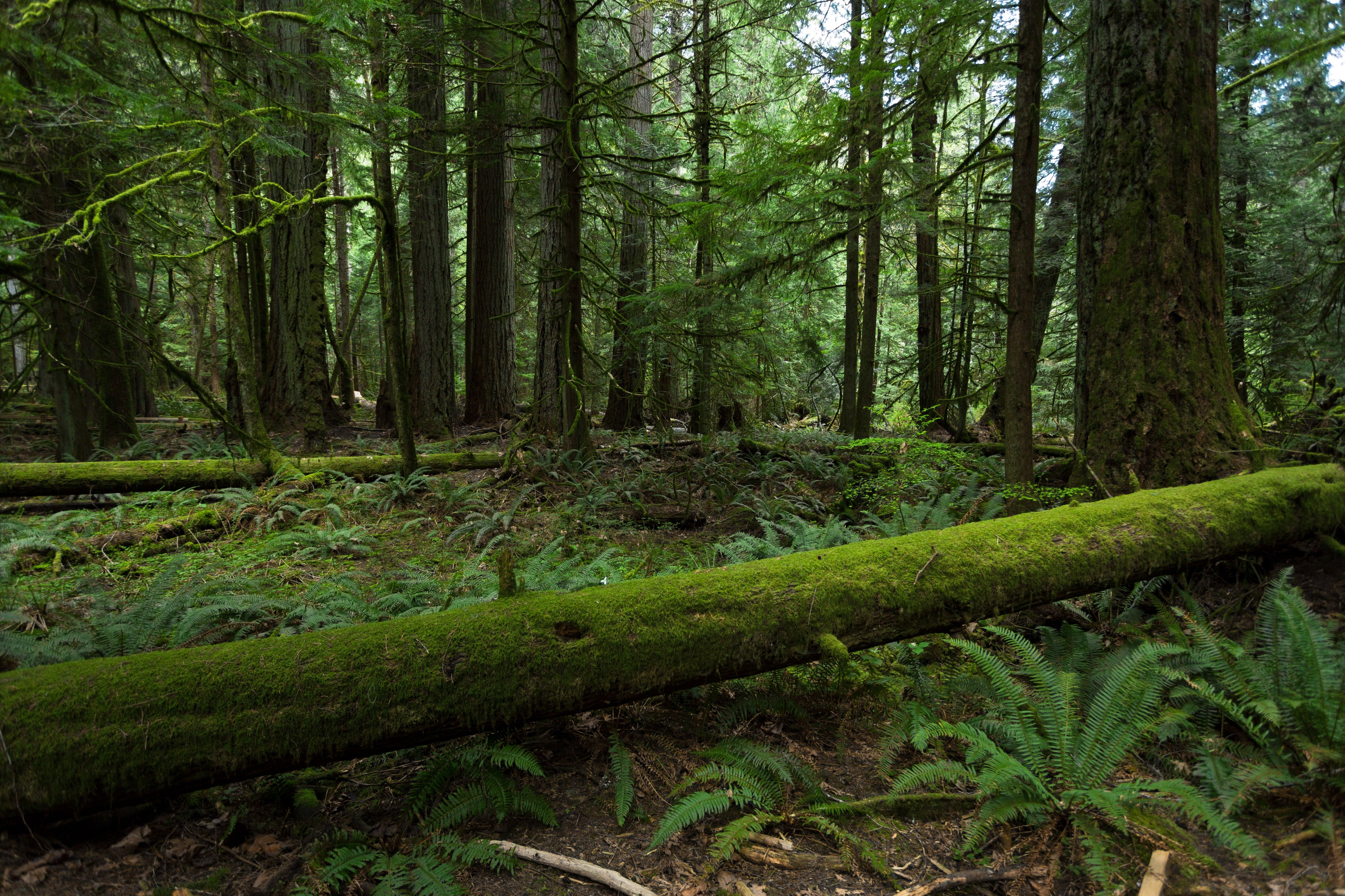 Pin by gMazz0016 on North American Forests Forest