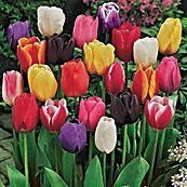Fall Flower Bulb Fundraiser.  Please help support CASA by purchasing your Fall bulbs through Flower Power