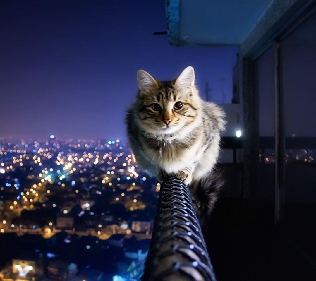Tu Recepcja Redlipstickresurrected Crazy Ivory Aka Ivo Berg おもしろい猫 クールな猫 愉快な動物