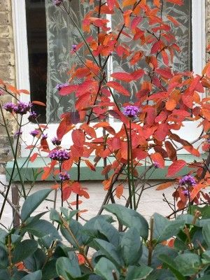 Amelanchier Is A Beautiful Vase Shaped Tree Plant Palette