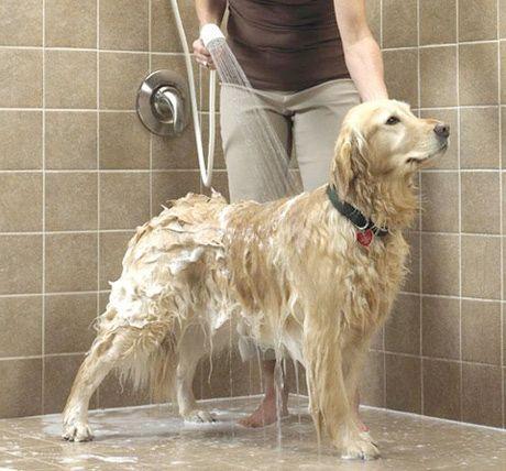 A pedidos da leitora Clarinha, reuni dicas de como facilitar sua vida na hora de dar banho em seu animal de estimação. Nem todo solteiro tem dinheiro sobrando