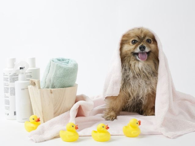 You Can Pick The Mobile Pet Wash In Dubai Whom You Want To Groom
